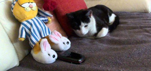 迫り来る睡眠欲求に従う猫、着信拒否も全力で