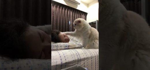渾身のキスでも起きない飼い主を、猫は眺める微妙な顔で