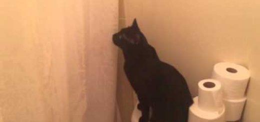 カーテンの奥から聞こえる歌声の、不穏な空気に叫び出す猫