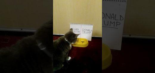 2つのお皿のどちらを先に食べきるか、未来を占う猫神託メソッド