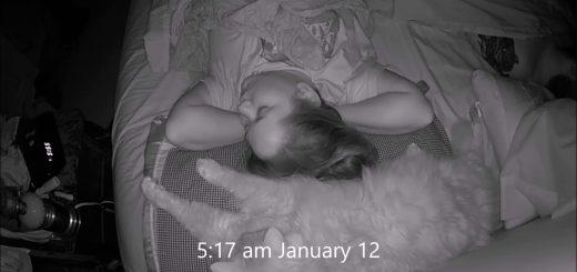 飼い主は猫の枕になるものの、猫が枕になることはなし