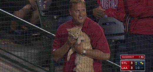 球場の客席横切りダッシュした猫、確保の男性に裏拳を決める