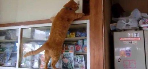 なぜならば天袋がそこにあるからさ、猫は目指すよその奥地まで