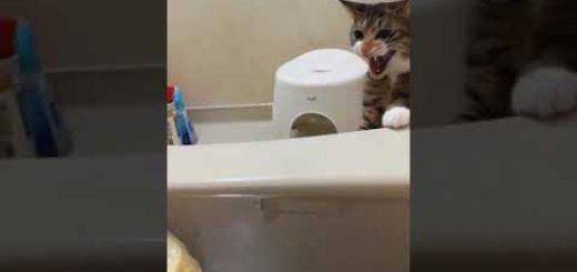 寒空の冬至に新たな風物詩、湯に浮かぶ柚子に困惑する猫