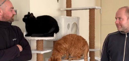 窓越しの知り合い同士がついに対面、窓掃除マンと黒猫ギネス
