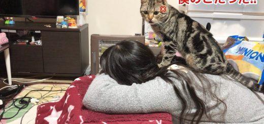 猫専用の炬燵を収奪された猫、徹底抗戦奪還成功