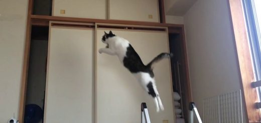 新年の飛躍を願う大跳躍、天袋までひとっ飛び