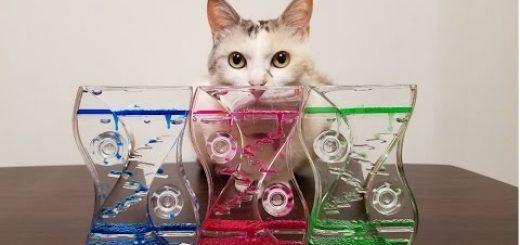 三色のオイルタイマーを魅入る猫、震える粒々に心癒され