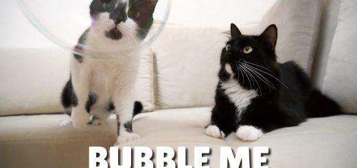 真ん丸のシャボンの玉を初めて見た猫、両のお目々も真ん丸に