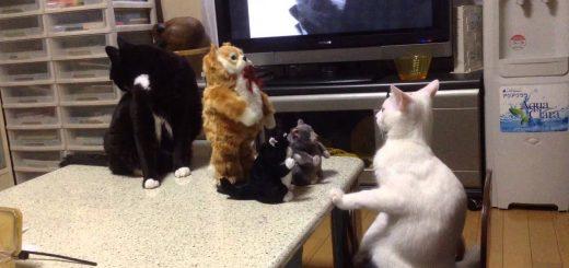 ダンシング猫ぬいぐるみに目を見張る猫、固まる白と慌てる黒と