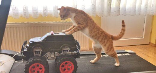 永遠に進まぬ車に気を掛ける猫、共に進もう後ろを押して