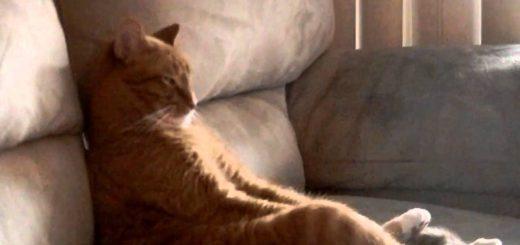 ソファに凭れ優雅にライブを鑑賞する猫、視線の先にはスラッシュメタル