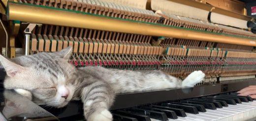 演奏中終始一貫爆睡の猫、超強力ララバイの音色で