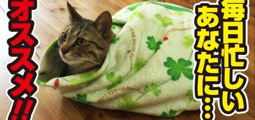 お手製の緑の皮の猫餃子、おいしさのコツは愛情と手早さ
