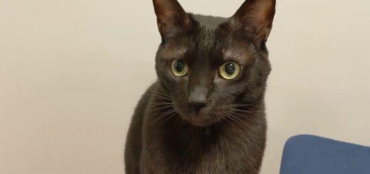 浮遊する太巻きに目を丸くして、黒猫驚き伸び猫と化す