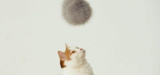 猫型のロボットよりも役に立つかも、猫型ドローン「にゃろーん」が誕生