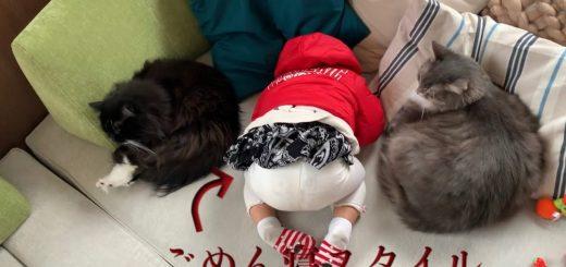 猫人猫一直線に三尻直列、団子のごときニャランダクロス