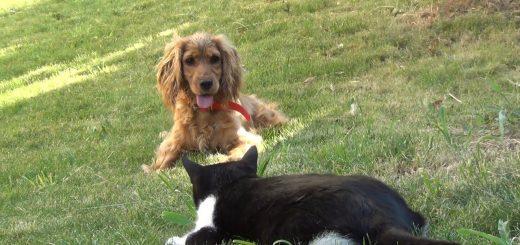 8つの目で睨みをきかせる4匹の猫、隣家の犬の侵入を許す