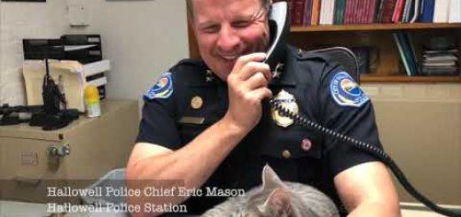 保護されて警察署内で勤務する猫、退職後には後任猫も