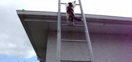 三毛猫は梯子を上る屋根へ空へと、シッポを揺らして猫背を伸ばして