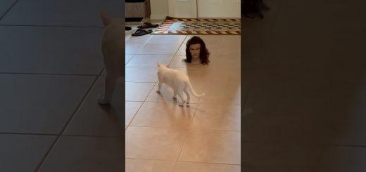 目力に気圧されこっそり後ろから、猫は近づくマネキンの首に