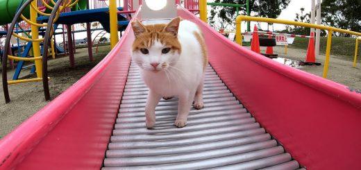 大型のキャットタワーと思っている猫、人を誘って一緒に遊具に