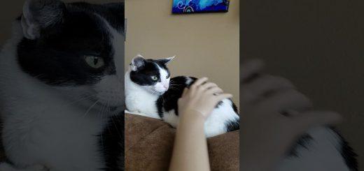 マネキンに体を撫でられ訝しげな目、隣の猫も挙動不審に