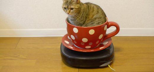 お一人様で遊園地気分を味わう猫、自動回転コーヒーカップ