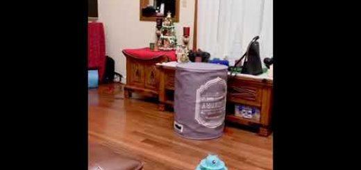 ランドリーバッグに飛び込み遊ぶ猫、逆転の発想で楽しさ2倍に