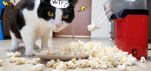 温風を吹き出す謎の調理器に、怪しむ猫は及び腰
