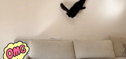 壁に映る光を猫が追いかけると、なぜだか部屋の床はキレイに