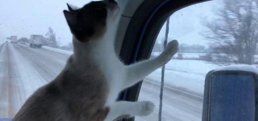 疾走するトラック寝床に空を見る猫、斬新な姿勢でバードウォッチング