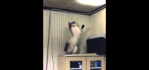 天井の光を追って猫は遊ぶよ、灯火管制などなんのその