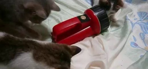ストラップとレトロなフォルムがオモチャに好適、猫は遊ぶよ懐中電灯