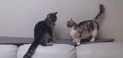 両の手のパンチにみなぎる闘争心、リーチが届かず猫はめだかに