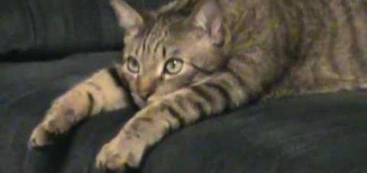 まんじりともせずトムジェリ見る猫、見れば見るほど姿勢がとろける