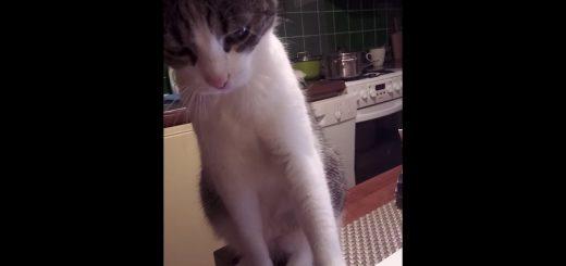 猫撫での閾値超えた瞬間を、捉えた映像どこか切なく