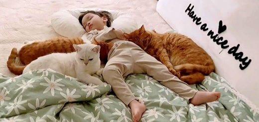 人間を湯たんぽにする5匹の猫、我も我もと寄り来たり寝る