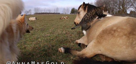 馬の背を巡って勃発静かなバトル、羨む犬と居座る猫