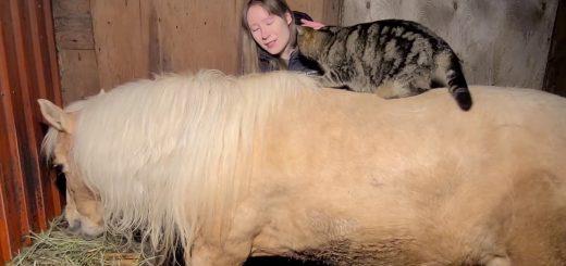 飼い主の歌に合わせて猫は舞う、草食む馬の背中を舞台に
