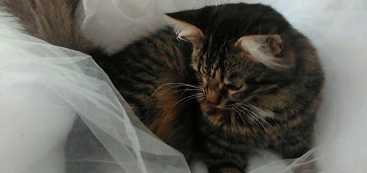 純白のドレスに潜むネズミ追う、猫に願いを悪い虫除け