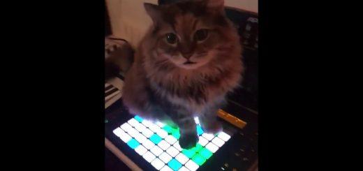 肉球でLAUNCHPADを演奏する猫、喉を鳴らしてブッダマシーンと化す
