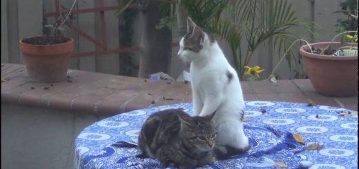 猫による猫のためのタイマッサージ、体重乗せた肉球の技