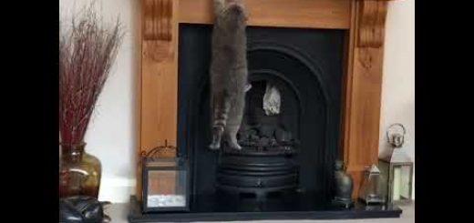 マントルピースに座って部屋を眺めたい猫、薄さに驚き懸垂をする