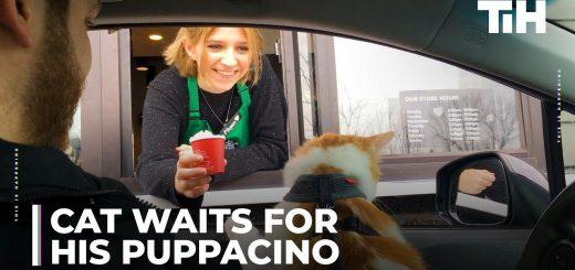 猫連れてスタバのドライブスルーでゲット、ワンちゃん用のシークレットメニュー
