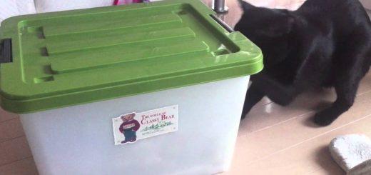 カリカリを隠した衣装ケースを開ける猫と、見て見ぬふりの同居猫