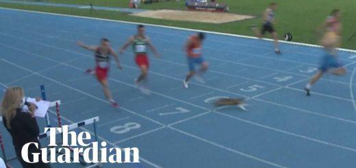 高速の走者と猫とが直角交差、ゴール付近で脚すり抜ける