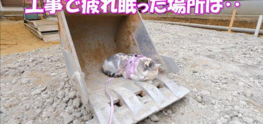 現場の猫の昼寝処はユンボのバケット、労働戦士の束の間の休息