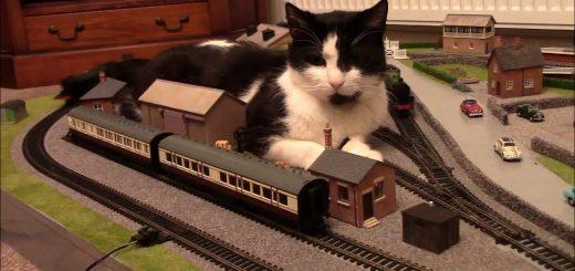 駅前の巨大な猫の3D、地方の駅ならきっとこうなる