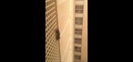 学生寮の7階にまでクライミングした猫、必死の救助で無事屋内へ